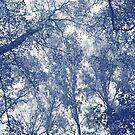 Blue Autumn - Cyanotype Effect by Artberry