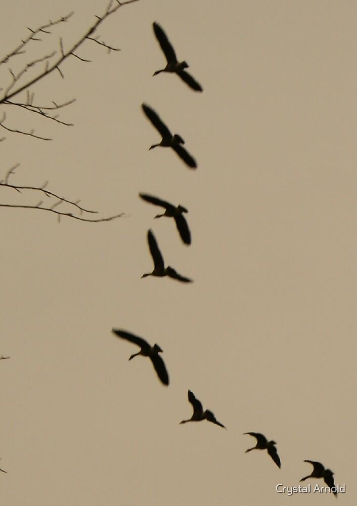 Flying V by Crystal Arnold