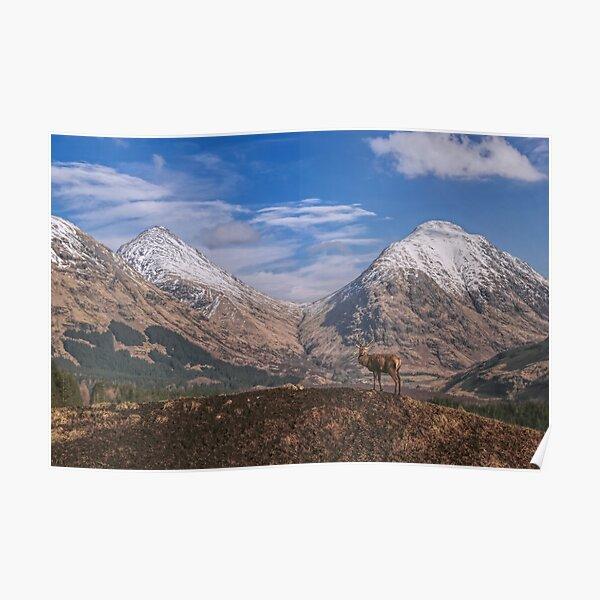 Red Deer Stag Glen Etive, Scottish Highlands. Poster