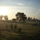 Early morning Field by RainCloud