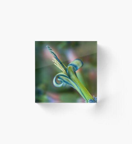 Blaue Locken Acrylblock