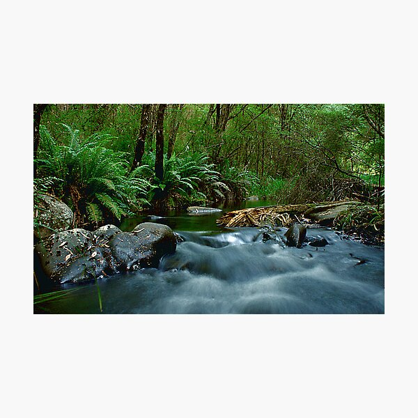 Yarra River Cascades Photographic Print