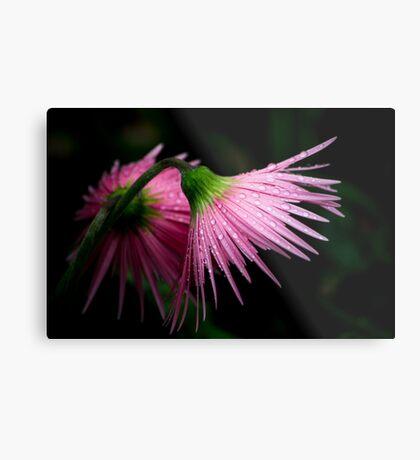 Pink Gerber Metal Print