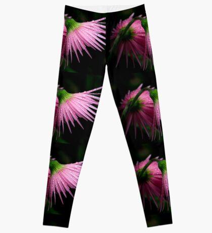 Pink Gerber Leggings