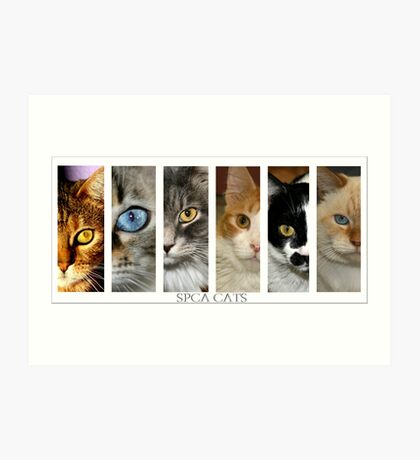 spca cats Art Print