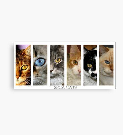 spca cats Canvas Print