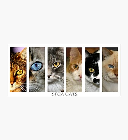 spca cats Photographic Print