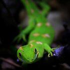 New Zealand Day Gecko by Dave Cauchi