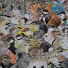 British Birds by pokegirl93