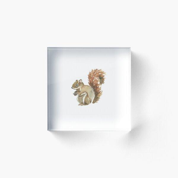 Cute Squirrel Design Acrylic Block