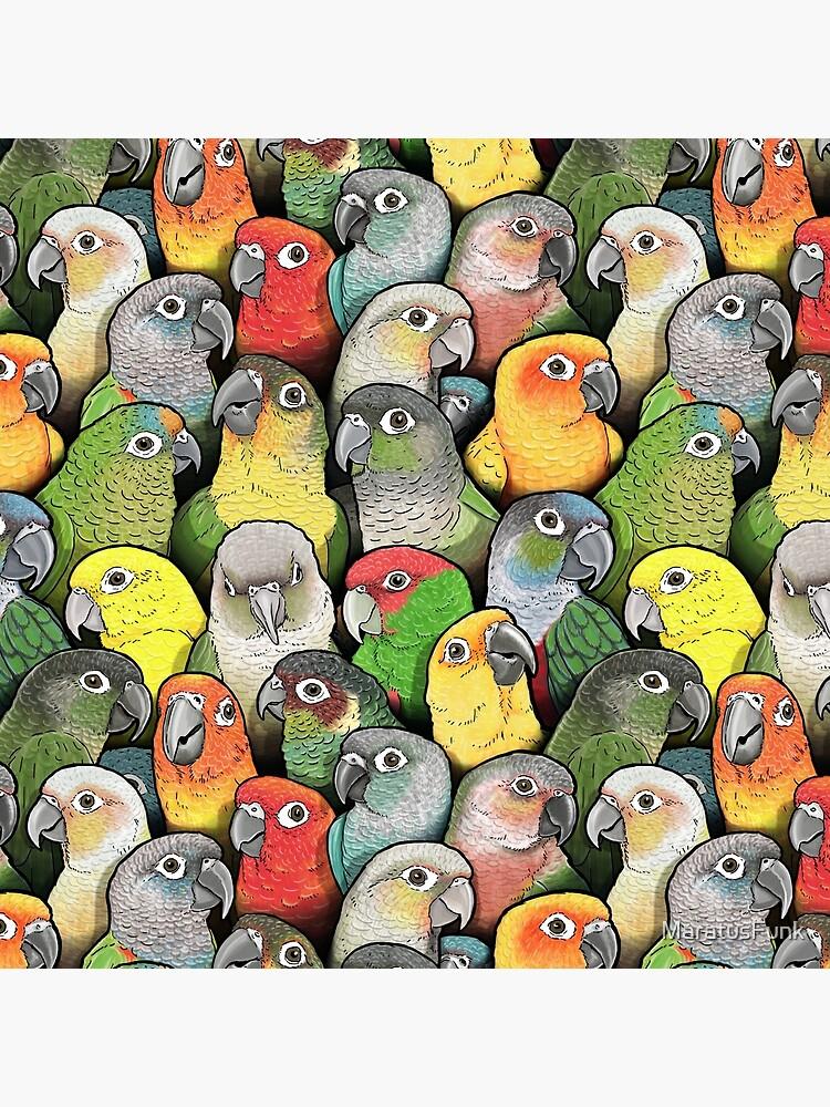 Colour of Conures by MaratusFunk
