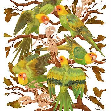 The extinction of the Carolina Parakeet. by ikerpazstudio