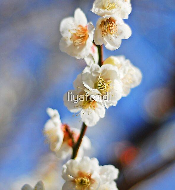 White Japanese Plum Blossom by liyafendi
