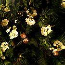 Blumennacht III von creativevibe