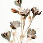 Burnt Alstroemeria by Marsha Tudor