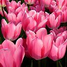 Field of Tulips by Nancy Barrett