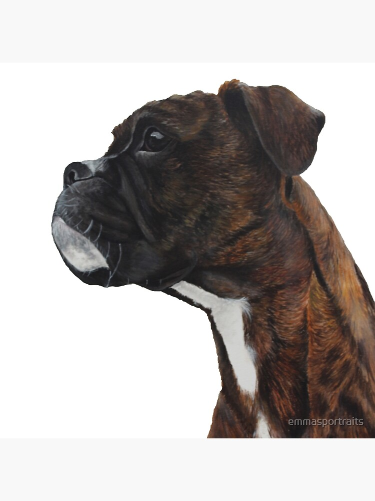 Brindle Boxer by emmasportraits