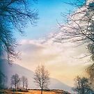 Bare trees in Winter countryside by Silvia Ganora