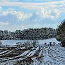 Winter Fields by Karen  Betts