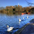 Swans glide past by Tom Gomez