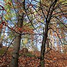 L'automne by Elfriede Fulda