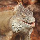 Green Iguana by kernuak