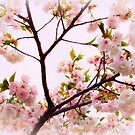 Cherry Blossom Charm by Jessica Jenney