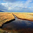 Golden Desert Oasis by Arla M. Ruggles