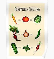 Companion Planting Guide Poster