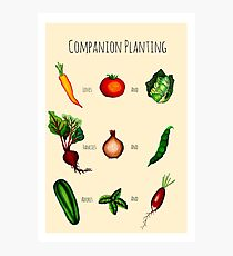 Companion Planting Guide Photographic Print