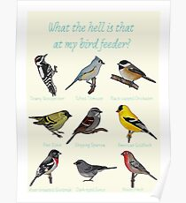 What the hell is that at my bird feeder? Poster