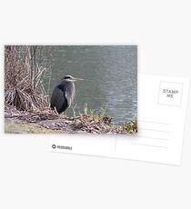 startled heron Postcards