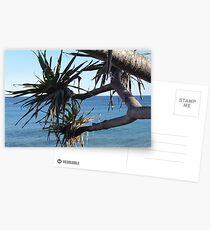 Pandanus 01 Postcards