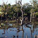 Mangrove Wetlands by Lou Van Loon