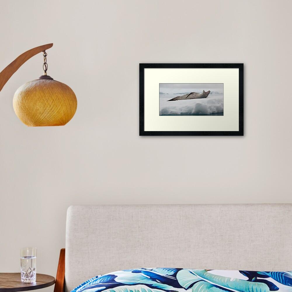 Leopard Seal Framed Art Print