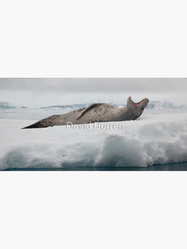 Leopard Seal by DavidBurren