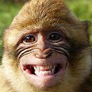 Affe von Gabi Siebenhühner