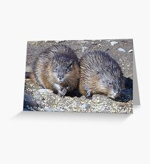 Muskrats Greeting Card