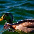 Fancy Duck by Joel Hall