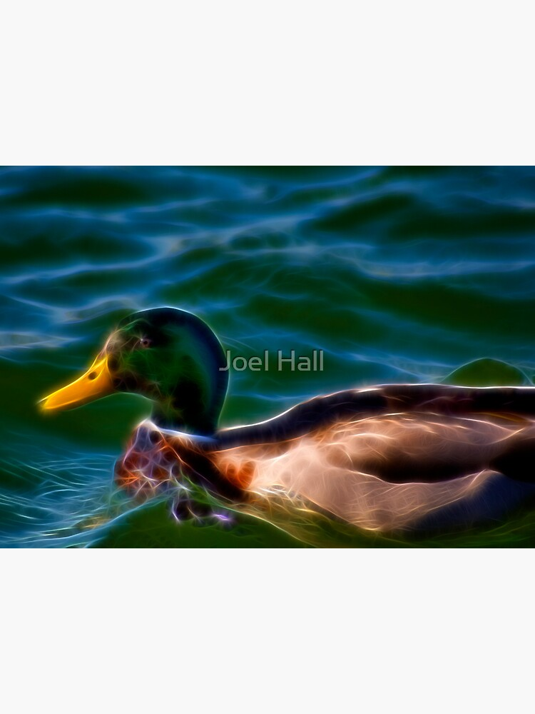 Fancy Duck by joeldhall