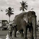 Mahout and his Elephant by Louise Fahy