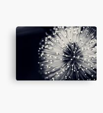 Marvelous Dandelion Canvas Print