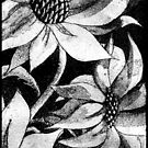 sunflower etching by picketty