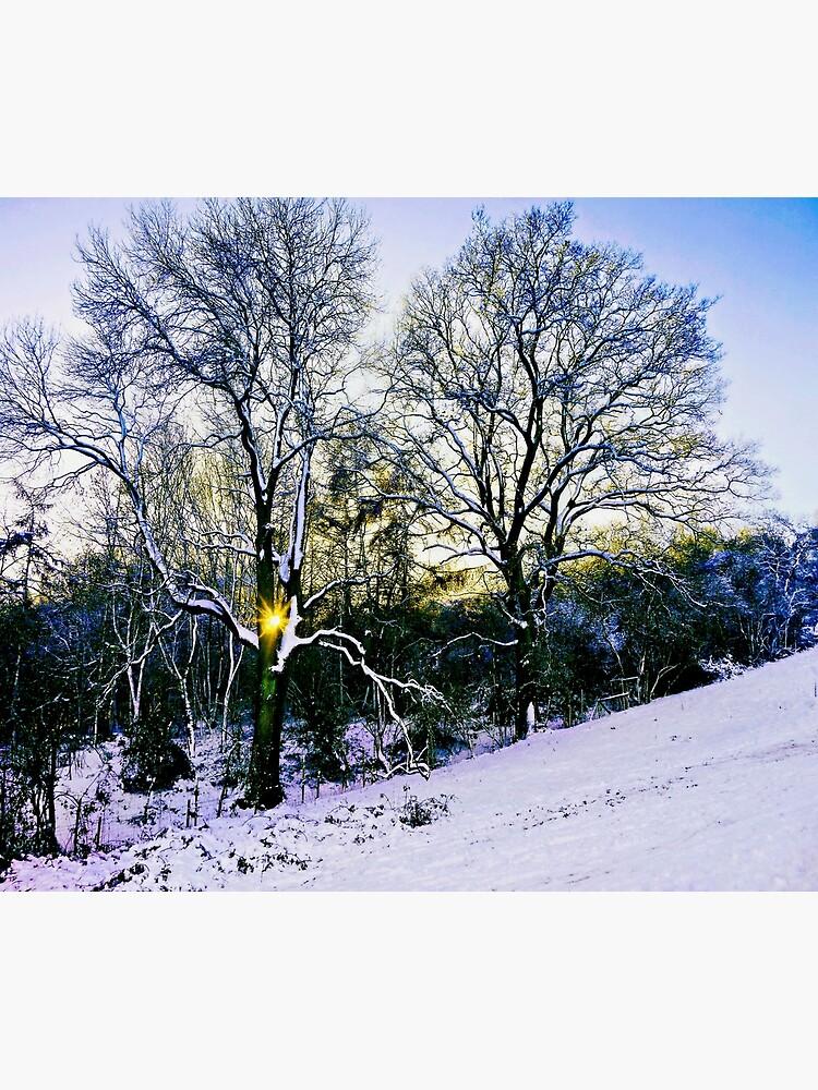 Winter Sunlight by ScenicViewPics
