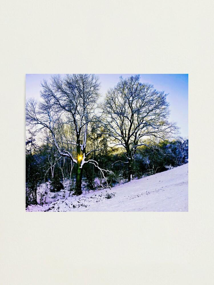 Alternate view of Winter Sunlight Photographic Print