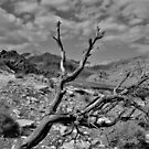 Red Rock Canyon Nevada by Harlan Mayor