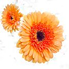 Orange Flowers by designingjudy