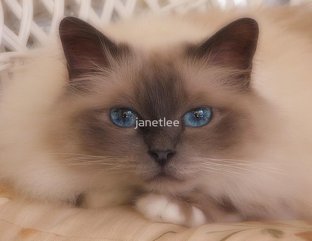 Hypnotize by janetlee