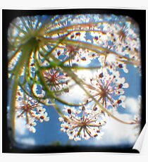 Look Up Through The Viewfinder Poster