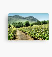 Vineyards Leinwanddruck